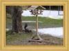 Até que enfim o inverno está acabando... até o nosso esquilo voltou!